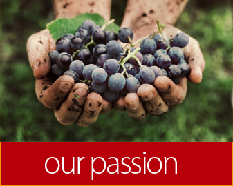 our_passion